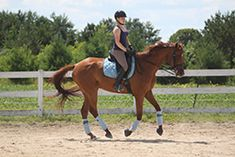 To begin to develop a horse's musculature, it's important to start slowly and take the time to create a solid foundation to build on later. This can be a young or green horse that&#8217…