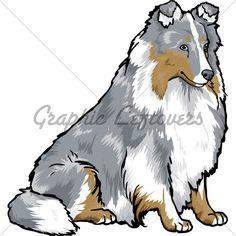 Adobe illustrator custom vector image of a Blue-Merle Shetland Sheepdog or better known as a Sheltie.