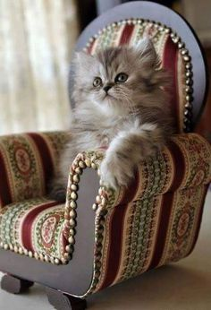 You do realise you'll have to keep buying me bigger chairs, don't you?