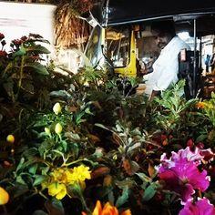Un peu de douceur à Bombay. 😊 😌 😚 #inde #india #voyage #travel #fleur #ricksaw #cute #EnfinUnPeuDeCalme