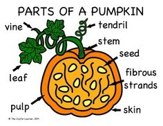 pumpkins ideas and venn diagrams on pinterest : pumpkin diagram - findchart.co