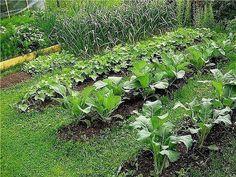 ХОЛОДНЫЕ ОГОРОДНЫЕ РАСТЕНИЯ  Как только снег исчезнет, а почва оттает, не медлите - готовьте грядки и высаживайте холодостойкие огородные растения. Пока готовите семена и выращиваете рассаду, следите за прогнозом погоды. С высадкой в грунт не торопитесь, но и не затягивайте. Выберите золотую середину, иначе первые ростки не пройдут проверку ночными заморозками или, попав в пересушенную почву, дадут не такой богатый урожай.  Для каждого овоща существует своя оптимальная температура посадки…