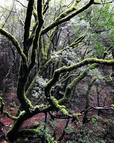 Outdoorsy Mama & LOtL Photography: Glowing Trees. Hike on Mt Tamalapis. Northern Cali...