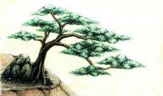 """"""" Juniper Tree """""""