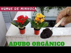 ESSE ADUBO SALVA SUA KALANCHOE - YouTube Planter Pots, The Creator, Youtube, Green And Gray, Organic Fertilizer, Sprouts, Gardens, Rose Trees, Shrub