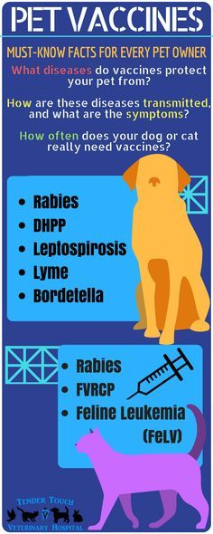 Worried about a vaccine reaction in your dog or cat? Know