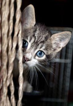 Baby blue eyes ❤