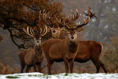 _C045537  Woburn, Bedfordshire, UK  Sometimes, you just can't believe your luck…