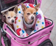 5 Things to Consider Before Purchasing a Dog Stroller