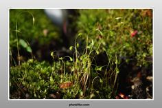 tiny grass on the ground is full of wonders
