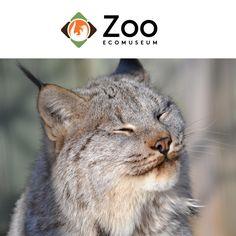 concours plaisir en famille au Zoo Ecomuseum