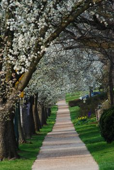 cambridge boulevard, grandview heights, ohio:    photography by emily swift