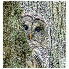 Nature--Nu Arte ❤ liked on Polyvore