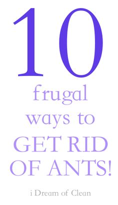 10 frugal ways to get rid of ants!! by @i Dream of Clean