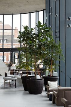 Each pot of Atelier Vierkant is unique and tells a different story. A story made of inspiration and transpiration. Tree Interior, Lobby Interior, Interior Garden, Interior Plants, Office Interior Design, Office Interiors, Indoor Trees, Indoor Plants, Greens Restaurant
