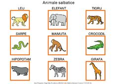 Animale salbatice Romanian Language, Kids Education, Tudor, Little Boys, Kindergarten, Learning, Giraffe Illustration, Double Deck Bed, Speech Language Therapy