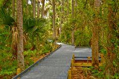 nature trails - Google Search