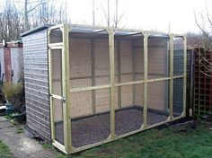 how to build an outdoor parrot aviary