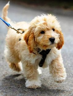 10 Dogs You Should At least Own Once