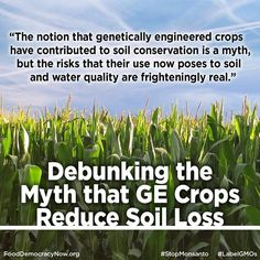 Defenders of genetically engineered crops regularly claim that these varieties cut erosion by encouraging farmers to use tillage practices that enhance soil conservation. A closer look reveals the opposite: GE varieties have made little or no contribution to cutting soil erosion in the United States, and they pose frightening risks to soil and water quality. More here: http://www.fooddemocracynow.org/blog/2014/oct/10 #food #GMOs #righttoknow #farmers