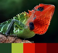 A Green Garden Lizard or Pala Katussa in Sinhalese changing its colour when threatened in the hills of Kadugannawa 99 kilometres from Colomb. Reptiles And Amphibians, Mammals, Colorful Lizards, Lizard Species, Wildlife Safari, White Eyes, Pictures Of The Week, All Gods Creatures, Green Garden