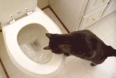 This cat says thank you for putting the toilet seat down.