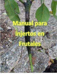 Consejos para hacer injertos frutales