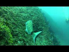 Pedra de Déu - Illes Medes