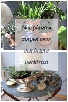 Tips voor planten in huis/ Planten in het interieur/ planten in huis inspiration Place Cards, Place Card Holders, Tips, Plants, Blog, Advice, Planters, Plant, Planting