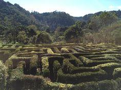 Labirinto do Amantikir jardins - Campos do Jordão