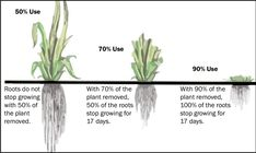Soil restoration is the process of improving the structure, microbial life, nutrient density, and overall carbon levels of soil. Many human endeavors – conventional farming chief among them – have… Organic Fertilizer, Organic Gardening, Gardening Tips, Desert Gardening, Growing Greens, Growing Plants, Carbon Sequestration, Cash Crop, Cattle Farming