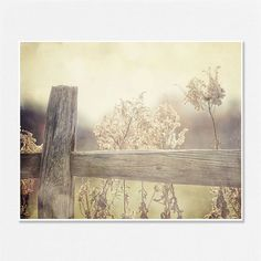 Nature Landscape Photography - Country Chic Shabby Chic Decor Rustic Cottage Decor Fence Picture - 8x10 - Beige, Cream, Tan Home Decor.. $30.00, via Etsy.