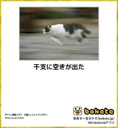 今度はネズミに騙されるなよ! Cute Cats And Dogs, I Love Cats, Smiles And Laughs, Funny Cute, Funny Animals, Cat Lovers, Dog Cat, Comedy, Funny Pictures