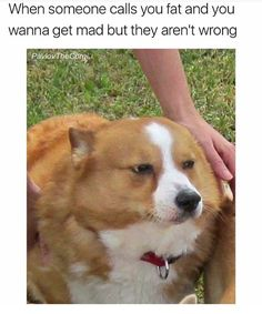 Animal Memes That Will Definitely Make You Smile - 28