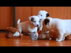 Three Absolutely Adorable Puppies  - First Steps for Dog Lovers!