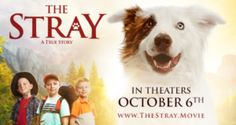 Interview with Mitch Davis, Director/Writer of The Stray