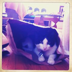 """Happy Caturday! As a treat Clyde """"helped"""" us unpack groceries…"""