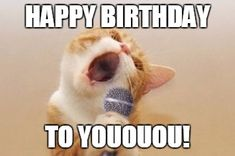 The Quest for the Most Hilarious Happy Birthday Meme - Funny Happy Birthday meme on image of cat singing in front of a microphone.