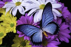 Beautiful Blue Wings Photograph by Garry Gay