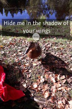 Hide me.
