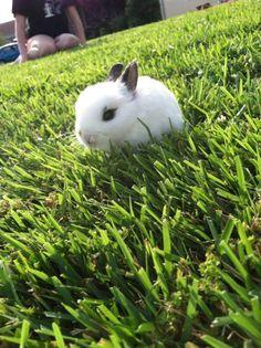 Tiny bunny explores the yard - May 29, 2012