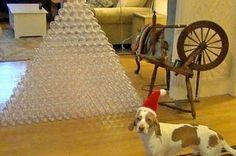 Dog Receives Christmas Present