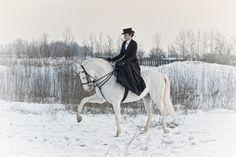Horses at Work - Gallery - Melis Yalvac - www.melisyalvac.com
