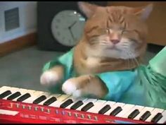 Keyboard Cat REINCARNATED! - YouTube. Could watch it all day long!