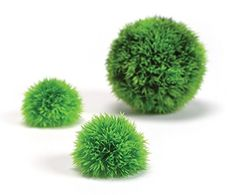 biOrb Aquatic Topiary Moss Balls, Pack of 3, Green Biorb http://www.amazon.co.uk/dp/B001GCU114/ref=cm_sw_r_pi_dp_DkwIwb064K1KK