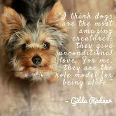Quote About Dogs Pictures dog quotes we rounded up the best of the best Quote About Dogs. Here is Quote About Dogs Pictures for you. Quote About Dogs dog quote quote number 543161 picture quotes. Quote About Dogs quote dog. Calvin And Hobbes, Best Dog Quotes, Puppy Quotes, Funny Dogs, Cute Dogs, Animal Love Quotes, Lancaster Puppies, Dog Hotel, Yorky