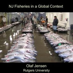 NJ Fisheries in a Global Context Olaf Jensen Rutgers University   Outline • Global marine fisheries • Status and trends • Black Sea Bass   What I mean b. http://slidehot.com/resources/east-coast-mare-ocean-lecture-jan-19-2012-nj-fisheries-in-a-global-context.29691/