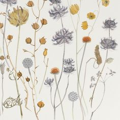 Angie Lewin 'Tuscan and Umbrian Seedheads, La Caviare' watercolour (detail) http://www.angielewin.co.uk/collections/original-work/products/tuscan-and-umbrian-seedheads-la-caviere