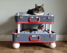 Thinking of Sue! Eco-friendly beds for seriously pampered pets. Love the suitcase cat bunk beds. There's also an amazing dog bed made from an old wine barrel. Cat Bunk Beds, Pet Beds, Dog Bed, Twin Beds, Vintage Suitcases, Vintage Luggage, Pet Furniture, Furniture Ideas, Woodworking Furniture