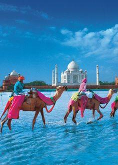 The Taj and the camels.  Loving those colours.